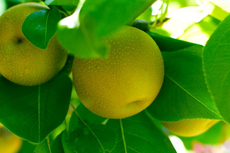 Oro Agri Pome Fruit Applicatiegids