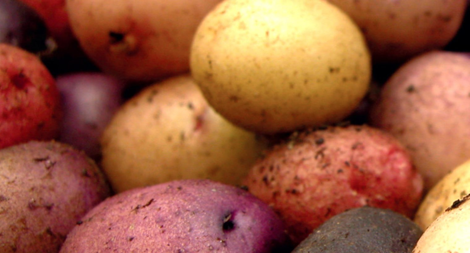 Oro Ağrı Edebiyatı - Patates Broşürü