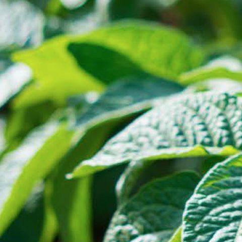 Oro Agri Europe Literature - Transformer Soil Conditioner